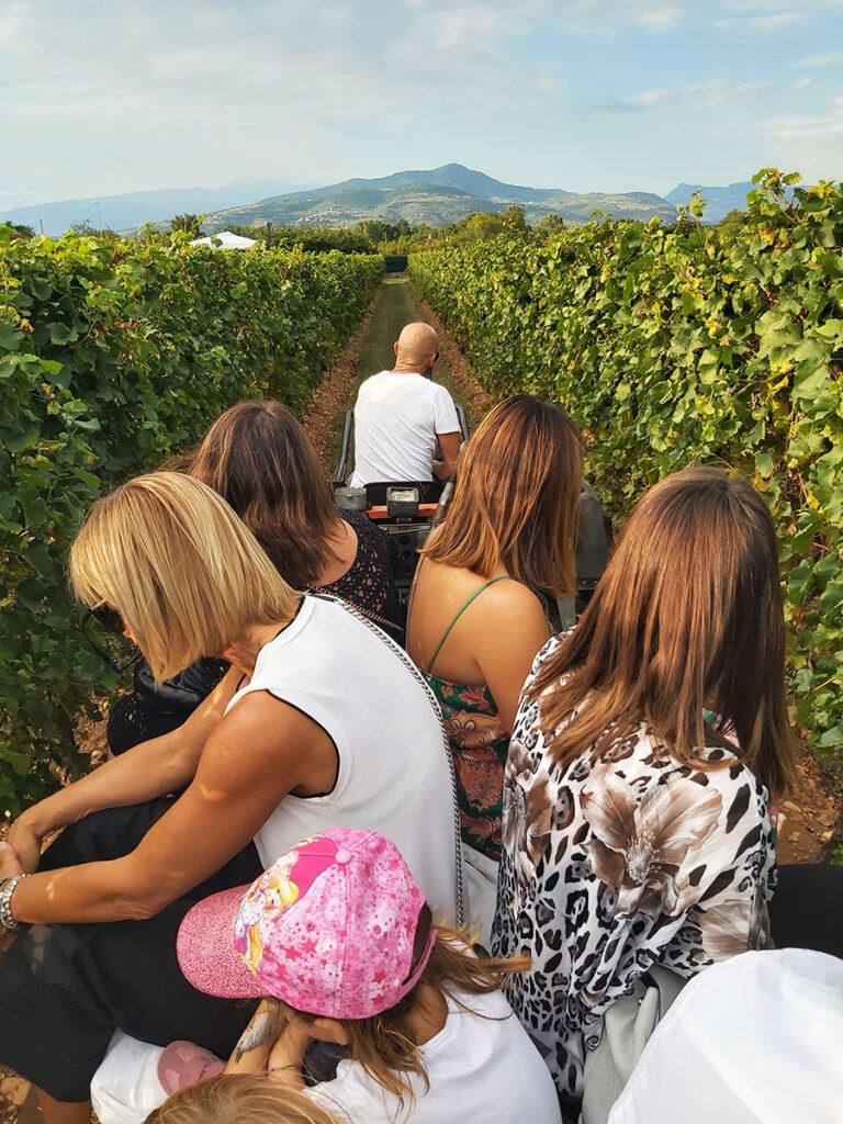 Domenica 5 settembre 2021 l'evento Vinamour presso l'Agriturismo La Torretta di Pescantina giro in trattore nella vigna